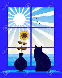 black-cate