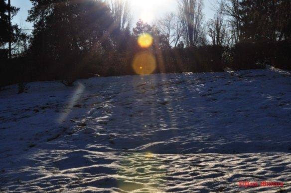 in-the-sun1