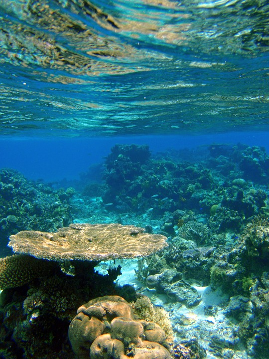 Ocean Reef Coral Tropical Underwater Fiji Natural