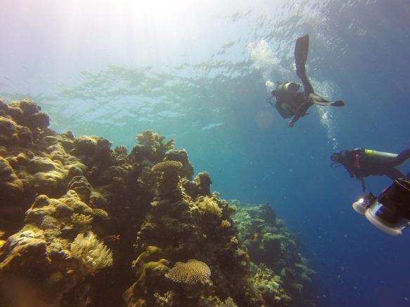 reef-1148995_960_720