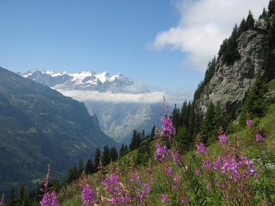 Mountains Fireweed Switzerland Snow Alps Rocks