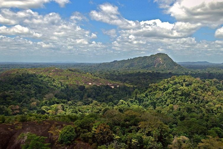 800px-Amazon_jungle_from_above