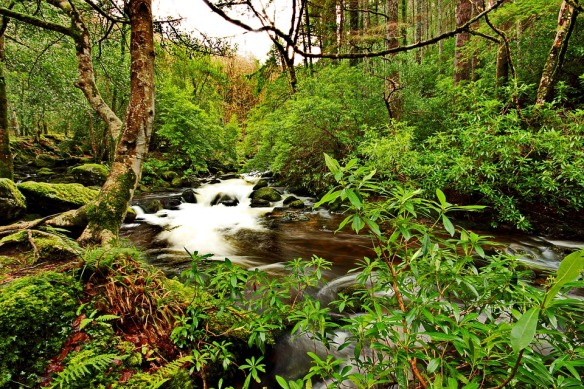Kerry Water Killarney Nature