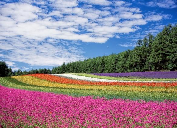 flower-garden-250016_960_720