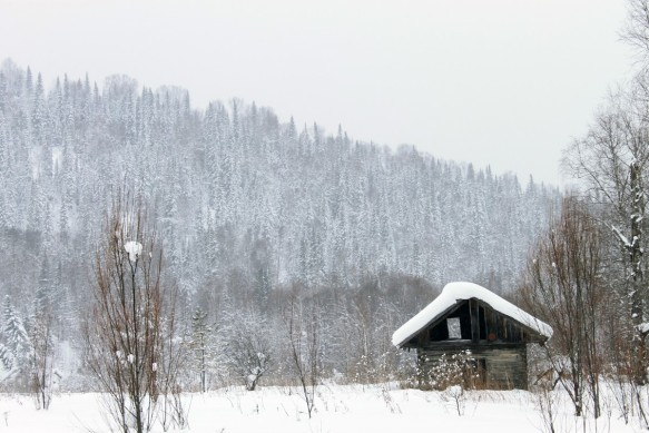house_barn_hut_forest_landscape_trees_winter_tree-1208322.jpg!d