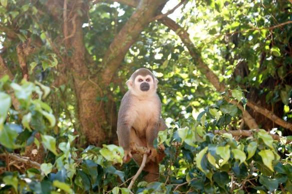 monkey-365795_960_720