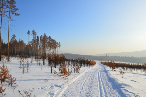 winter_siberia_snow_forest_trees_fringe_winter_forest_pine-627323.jpg!d