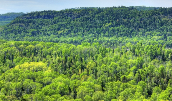 ontario-pigeon-river-provincial-park-the-large-forest