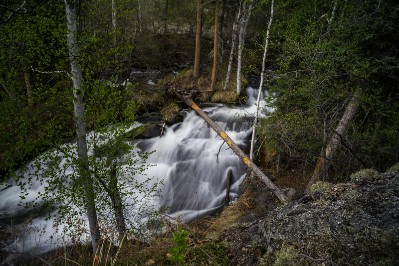 trees-and-nature-scenery-of-the-smaller-side-of-cameron-falls