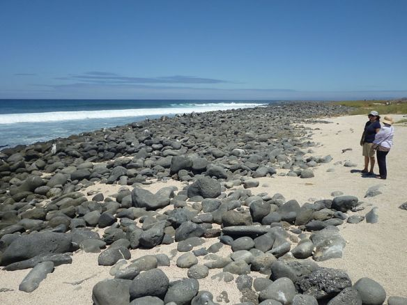 800px-Beach_in_North_Seymour_Island_Galapagos_photo_by_Alvaro_Sevilla_Design.