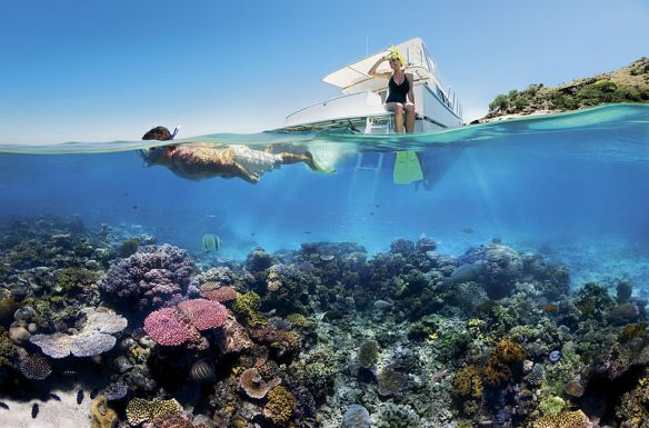800px-Reef_Snorkelling_on_the_Great_Barrier_Reef