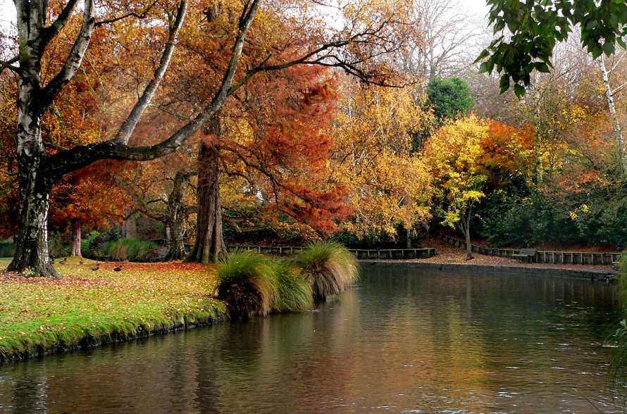 tree-plant-leaf-flower-river-canal-432279-pxhere.com
