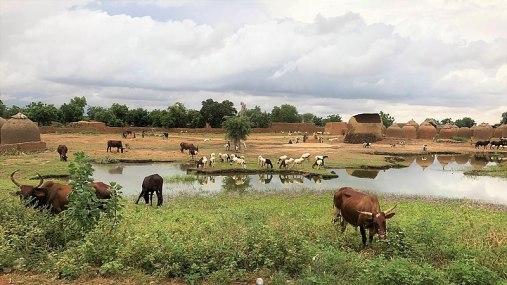 800px-Niger,_Salewa_(4),_roadside_view