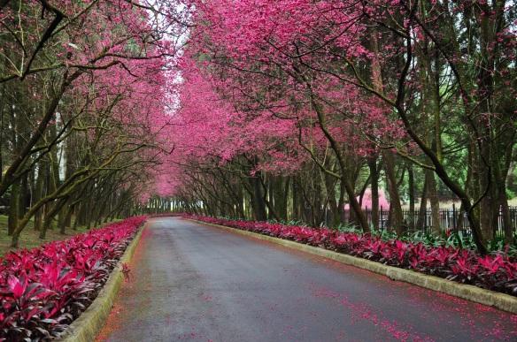 landscape-tree-blossom-plant-road-trail-915777-pxhere.com
